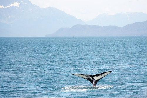 Wild-Whale