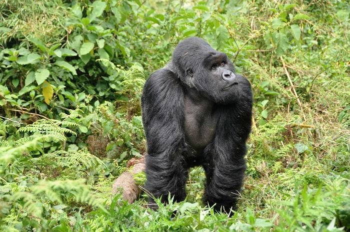 rwanda-donde-ir-en-2020