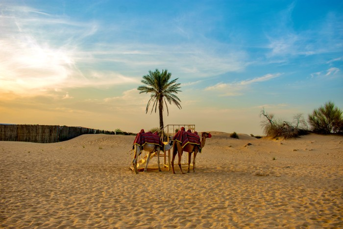 things-to-do-in-dubai-dubai-desert